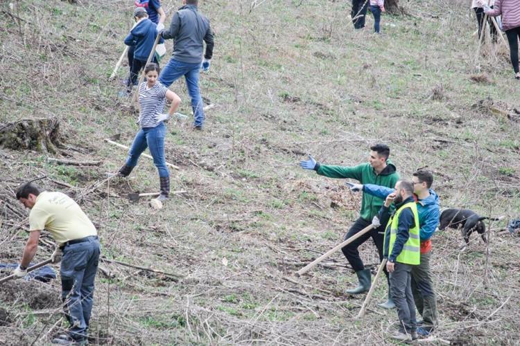 O mie de voluntari și CERT Transilvania au împădurit 4 hectare de teren în Florești
