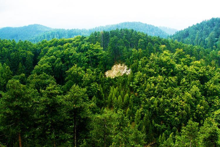 Ministrul Ioan Deneș: România are printre cele mai mari suprafețe de păduri virgine din Europa