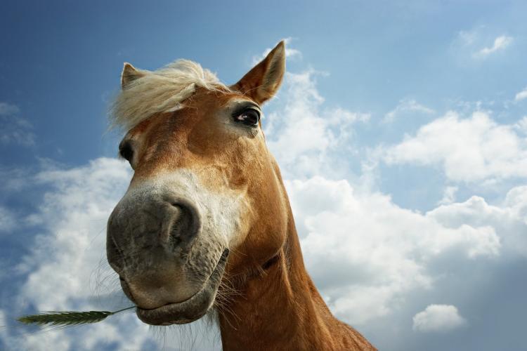 CLUJ: Hoți prinși în flagrant după ce au furat un cal! Mergeau pe marginea drumului, spre Oradea