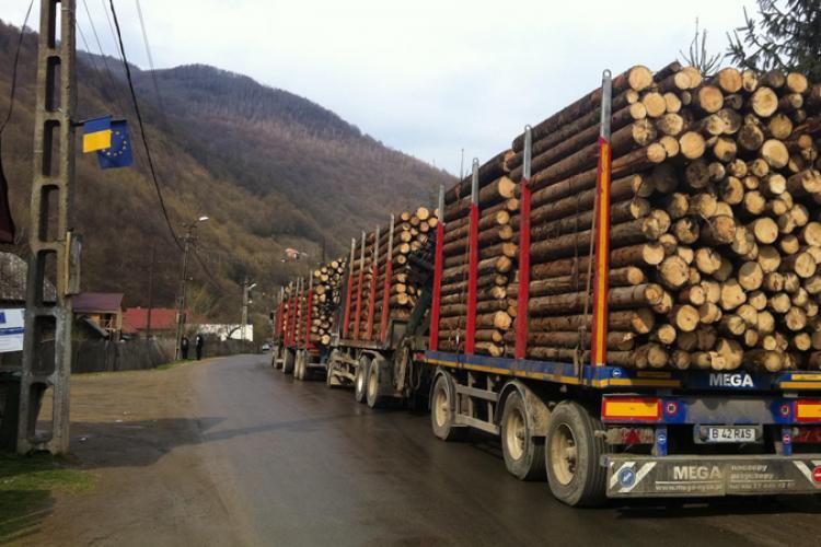 Consiliul Concurenței extinde ancheta pe Piața Lemnului. 35 de companii anchetate