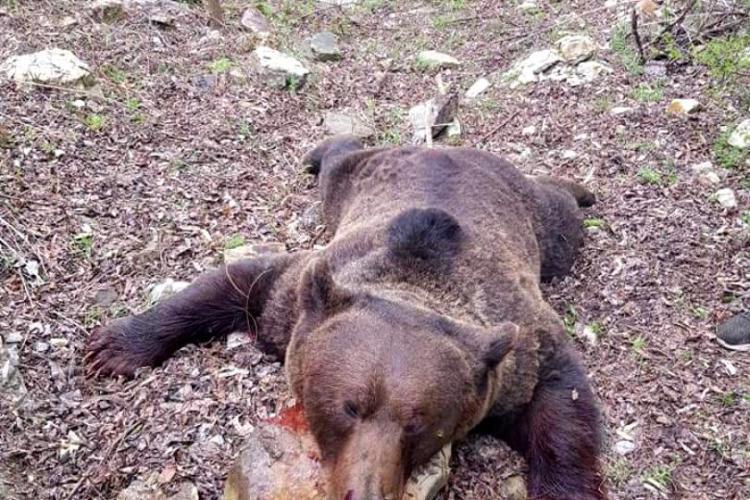 Urs împușcat, batjocorit de vânătorii români - VIDEO