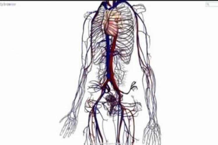 Google Body 3D! Noua harta a corpului omenesc - VIDEO