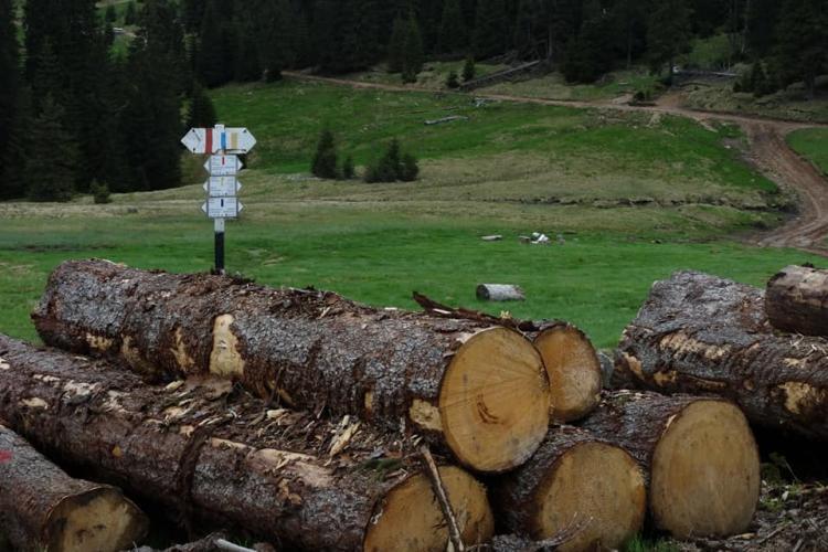 Prăpăd în Padis/Parcul Apuseni. Se taie pădurile vechi de 70 de ani - FOTO