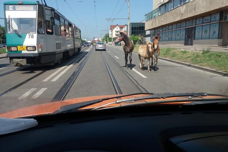 Clujul e ca în Vestul Sălbatic. Sunt cai pe Bulevardul Muncii - FOTO