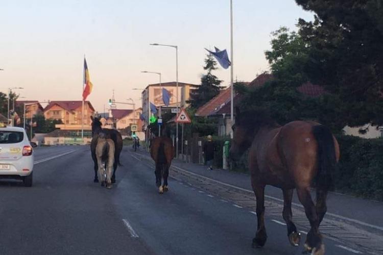 Cai în trafic la Florești, în plină zi FOTO