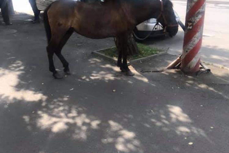 Cal lăsat liber prin Cluj-Napoca! A ajuns în centrul orașului - FOTO