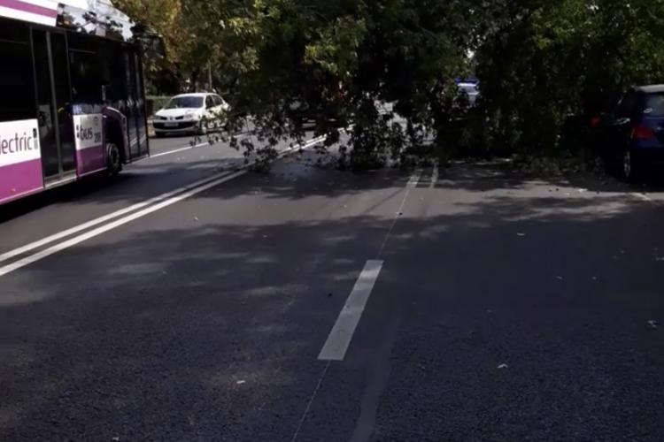 ATENȚIE, șoferi! Copac căzut pe stradă, pe Bulevadrul Nicolae Titulescu FOTO