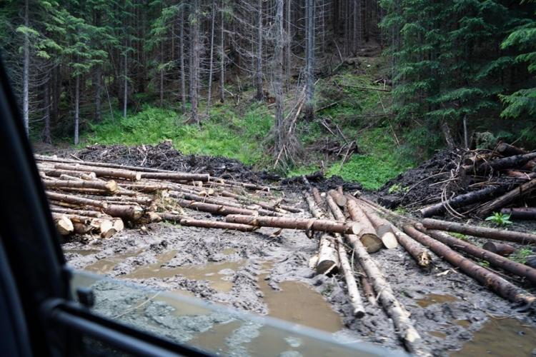 Senatorul Goțiu cere anchetă pentru complicitatea Poliției în jaful pădurilor de pe Valea Topologului - FOTO