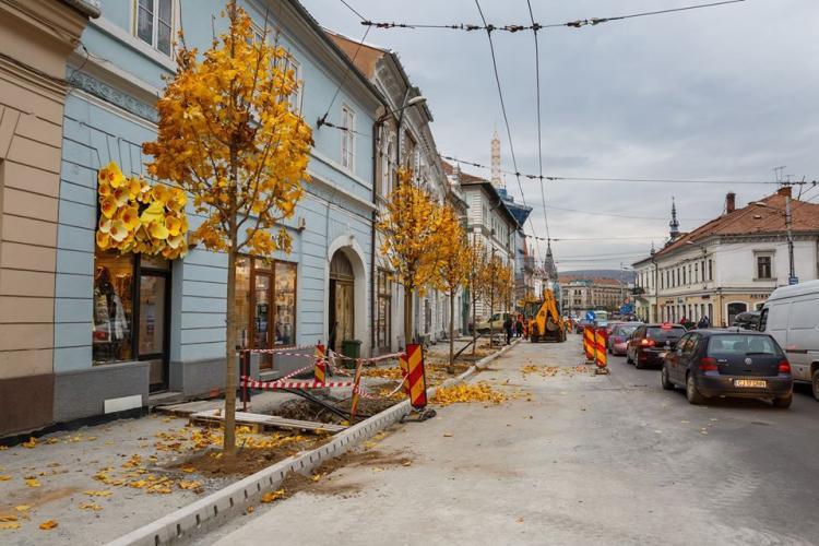 Primăria Cluj-Napoca a început plantarea celor 52 de copaci pe strada Regele Ferdinand. Câte lucrări au mai rămas de făcut