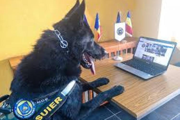 Iohannis a semnat legea prin care animalele de serviciu primesc îngrijire pe viață
