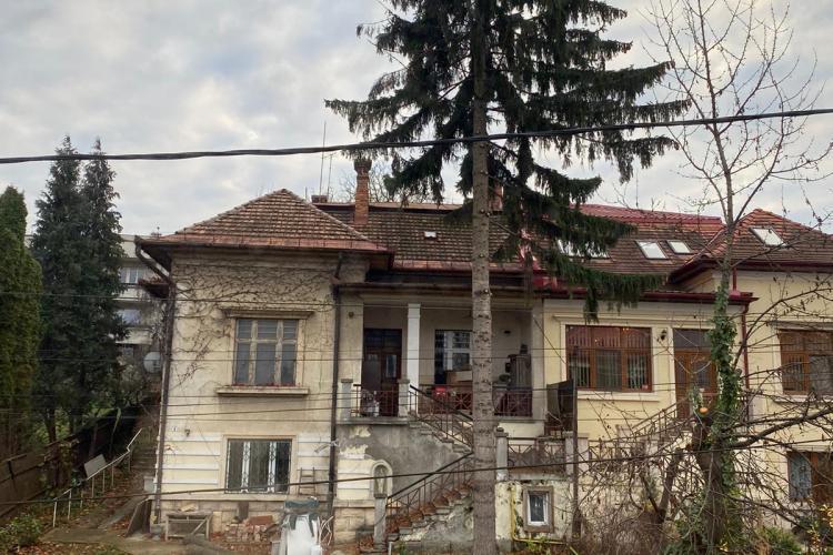 Brad secular, printre cei mai bătrâni din Cluj, doborât la pământ fără acte - FOTO