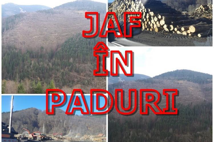 Cât îi mai SUPORTĂM! Taie pădurile seculare de pe Valea Drăganului - VIDEO
