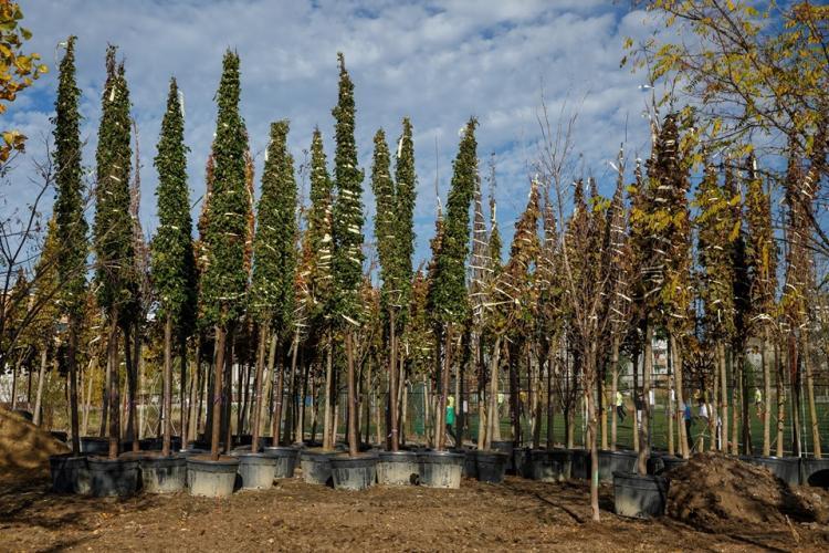 Lucrările la noul parc Între Lacuri sunt în toi! Au fost plantați primii arbori FOTO