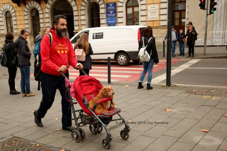 Cluj: Povestea cățelului plimbat de stăpân în cărucior pentru că e bolnav - FOTO