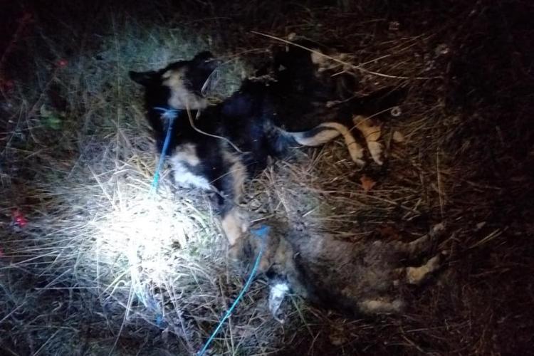 Criminal de animale, câini și pisici, depistat în Feleacu! Iubitorii de animale spun că sadismul este dus la extrem - FOTO