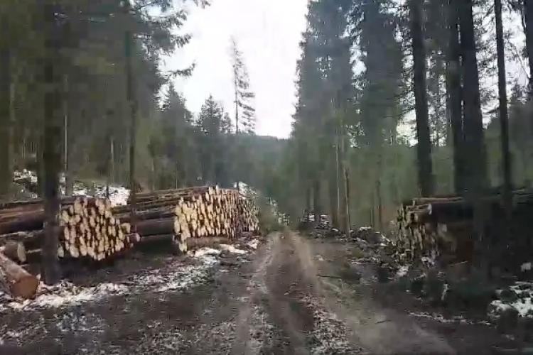 Defrișări masive pe Valea Drăganului. Tăierile continuă fără milă - VIDEO