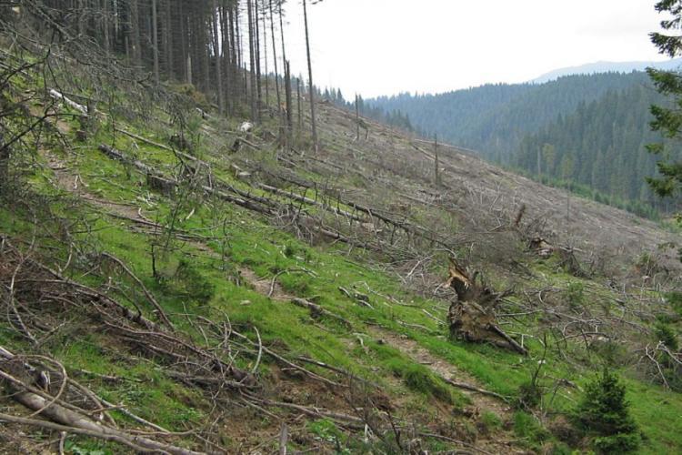 În România se taie pe oră peste 3 hectare de pădure. Afacerile cu lemn sunt URIAȘE