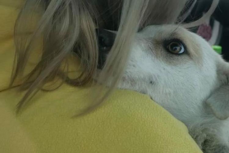 Cățelușa abuzată sexual la Cluj a ajuns în grija unei asociații pentru protecția animalelor: Lisa a fost salvată
