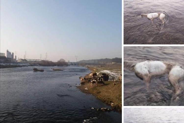 Un nou caz de barbarie! Câine legat și aruncat în Someș, la Florești - FOTO