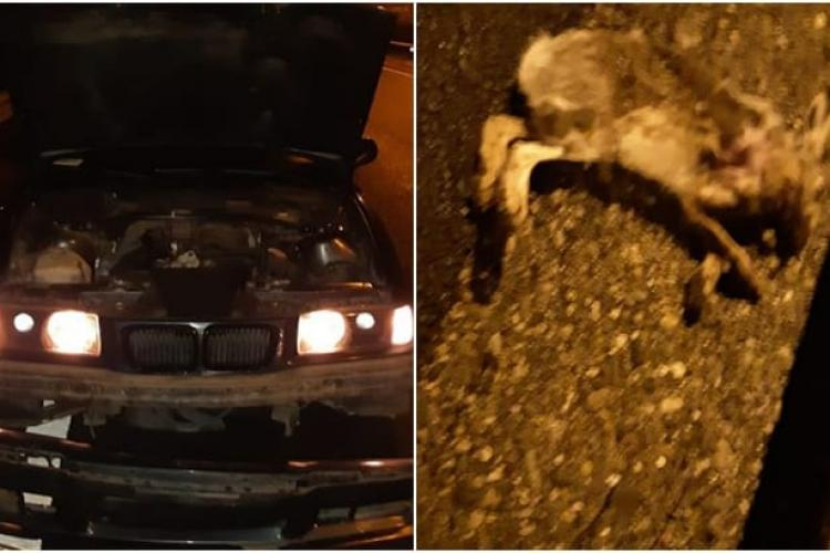 BMW avariat pe Autostrada Cluj - Turda. Un iepure a sărit în fața mașinii - FOTO