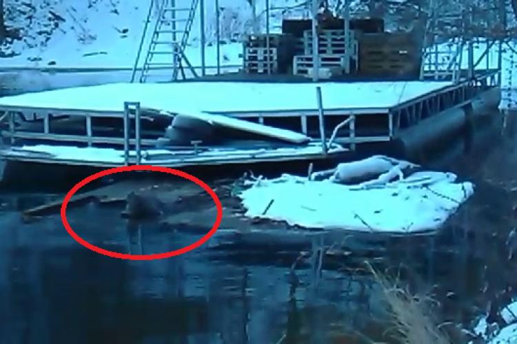 Vizitator surpriză pe pontoanele șmecherilor de la Tarnița! Pontoanele au distrus ecosistemul natural - VIDEO