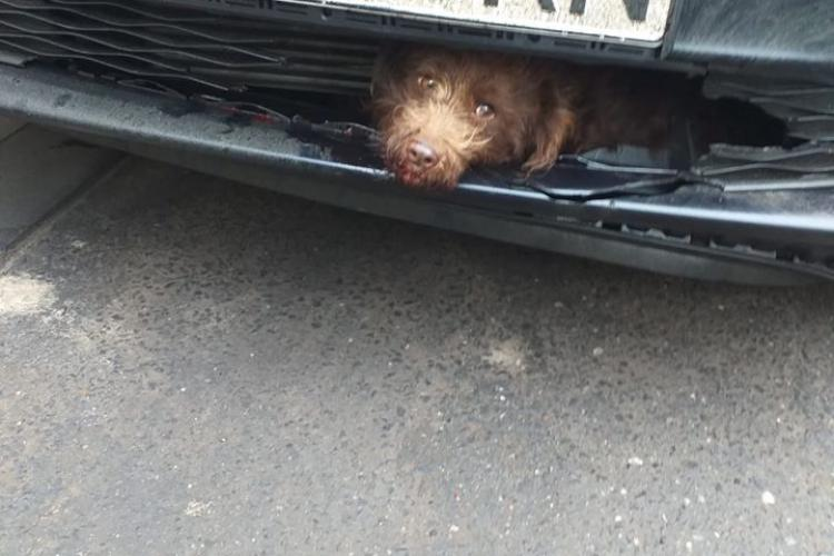 Cățel lovit de mașină la Cluj! A scăpat într-un mod miraculos - FOTO