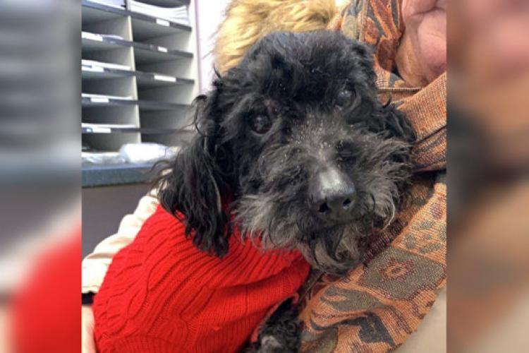 Câinele Moses a fost găsit la 800 de km de casă, după ce a traversat marea cu un vapor