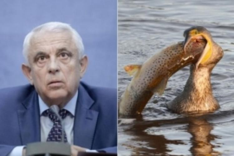 Ce afaceri ascundea Petre Daea pe spatele cormoranilor. Ministrul Agriculturii a făcut dezvaluiri