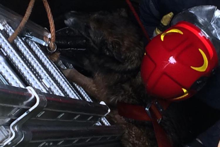 Pompierii clujeni au intervenit pentru a salva un cățel căzut într-o fântână FOTO