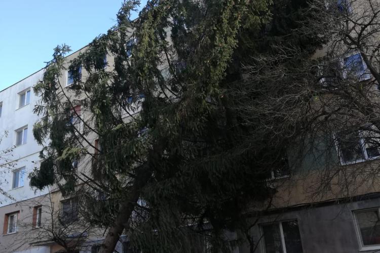 Vijeliile au făcut ravagii la Cluj! Copaci doborâți și panouri publicitare suflate de vânt FOTO