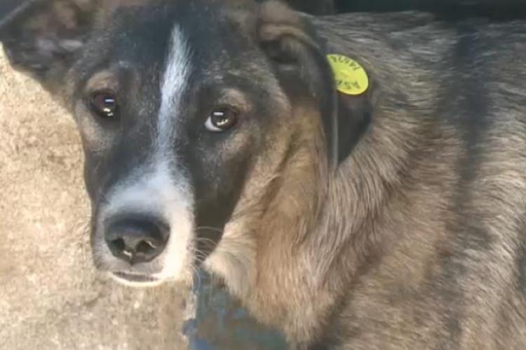 Un grup de vietnamezi care lucrează la Cluj au furat și au MÂNCAT un câine
