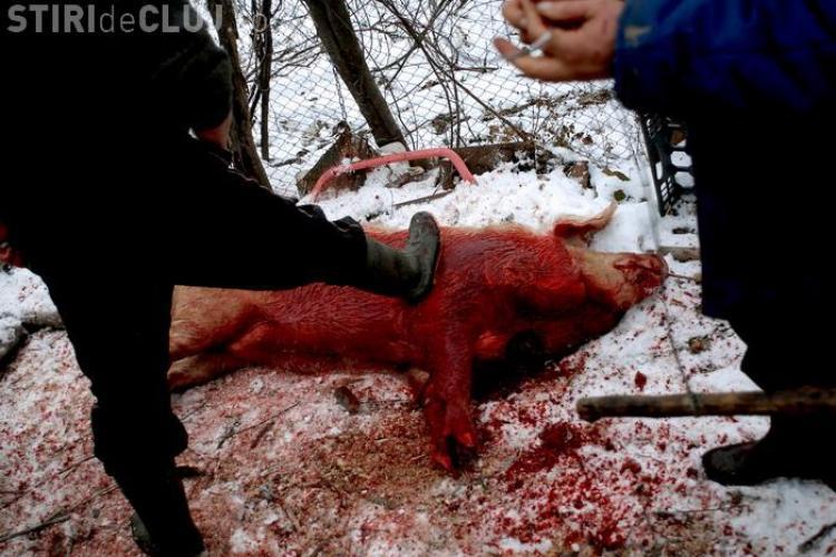 Romani luati pe sus de trupele SWAT in America, pentru ca taiau porcul in curte