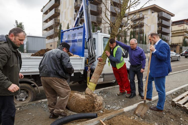 Boc a plantat copaci în mjlocul trotuarului în Bună Ziua. Clujenii sunt șocați - FOTO