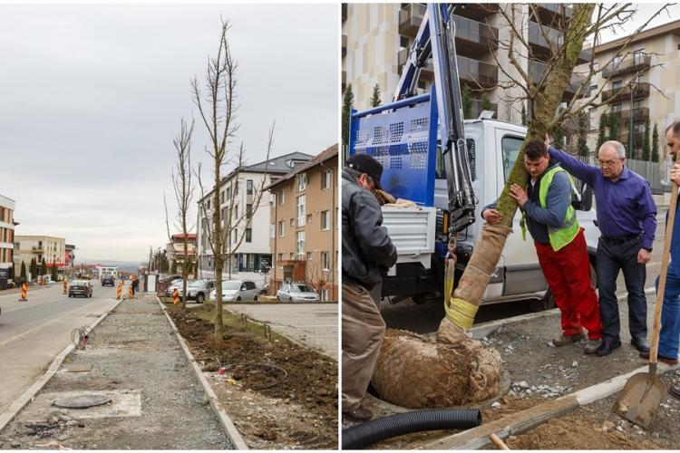 Copacii plantați de Emil Boc pe Bună Ziua au fost scoși de pe trotuar: Am fost prins într-o mini capcană. Clujenii au dreptate! - VIDEO