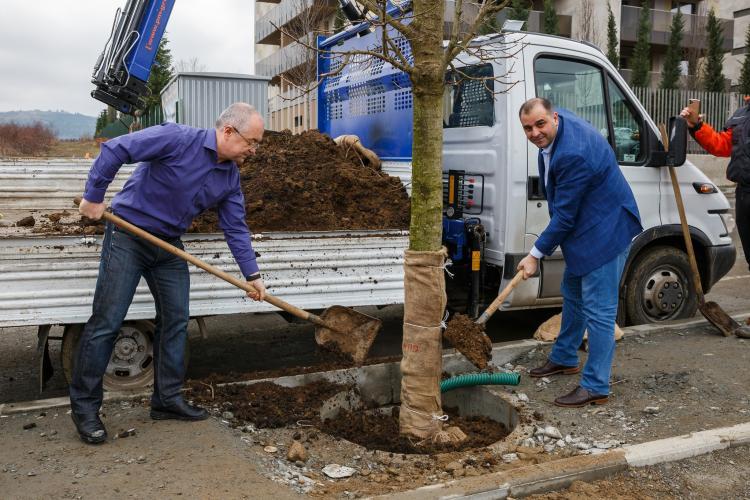 """Un lector de la UBB Cluj """"șterge"""" pe jos cu """"populistul"""" Boc, care plantează copaci electorali pe trotuar, în cămașă și fără cască - FOTO"""