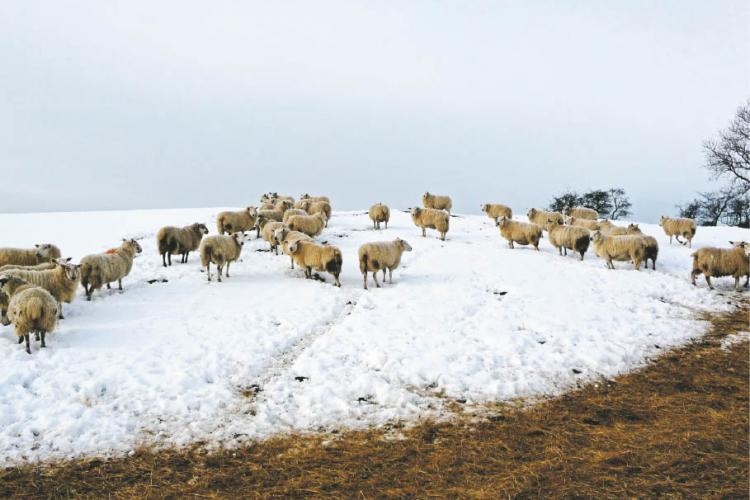 Ninsoarea mieilor. Ninge la Cluj în zona de munte - VIDEO