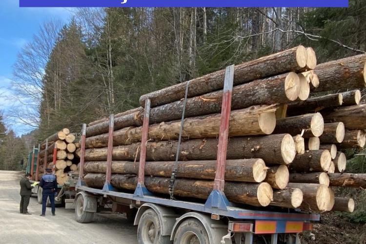 Controale de amploare pentru depistarea furturilor de copaci la Cluj. S-au confiscat zeci de metri cubi de lemne FOTO