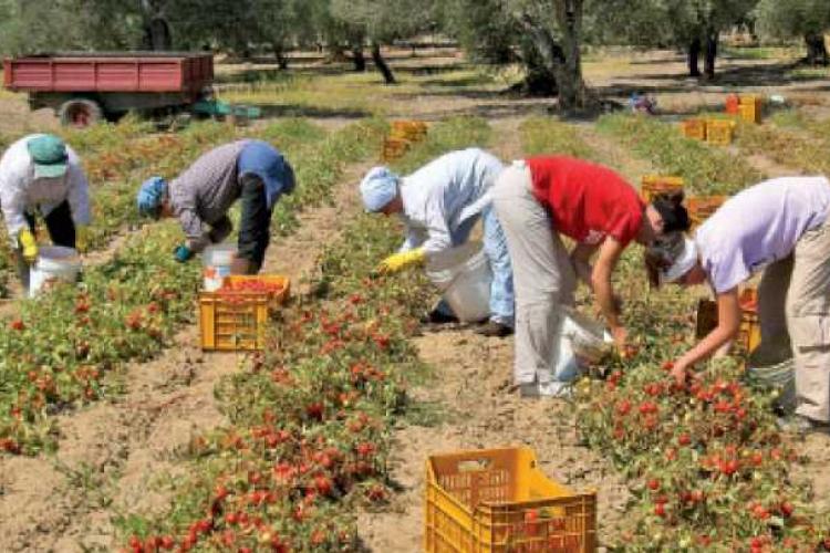 S-a întors roata! Italienii sunt disperați pentru că au plecat muncitorii români din agricultură. Îi cheamă înapoi