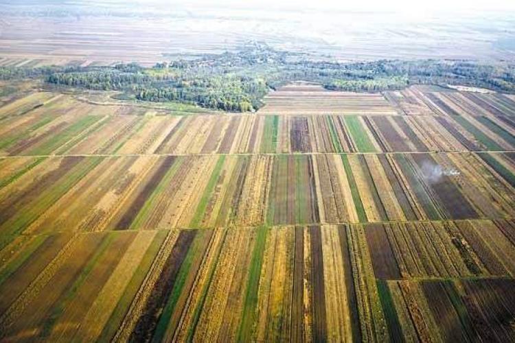 Guvernul anunță noi măsuri de sprijin pentru procurarea de deziznfectanți și pentru agricultură