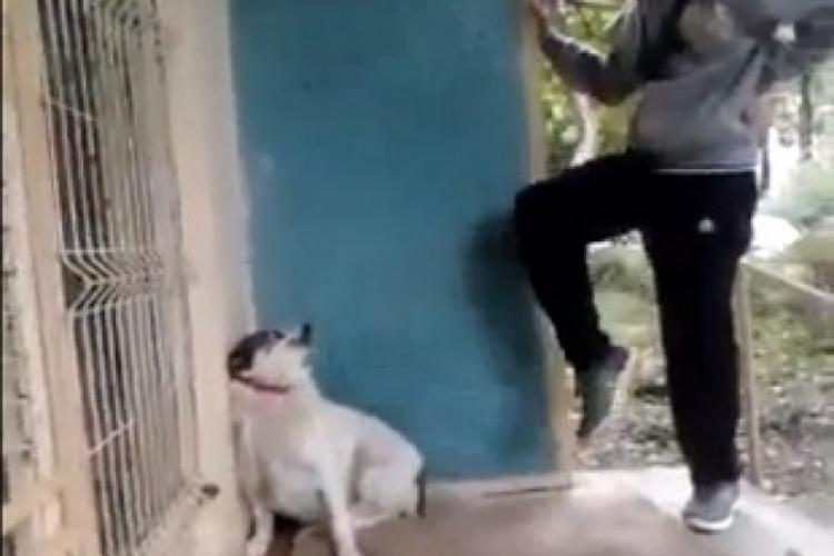 Dosar penal pentru un clujean care și-a bătut și chinuit câinele