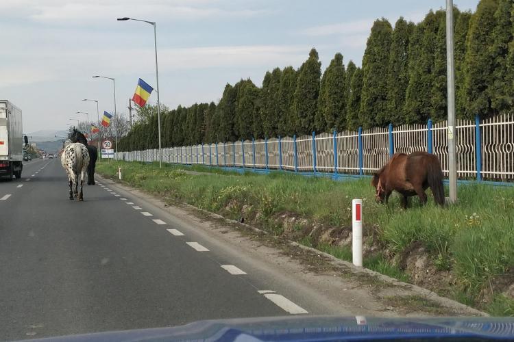 Cai lăsați liberi pe stradă la intrare în Florești. Se plimbă pe carosabil FOTO
