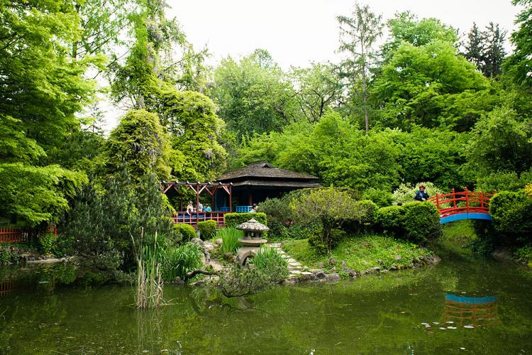 Se redeschide parțial și Gradina Botanică din Cluj-Napoca