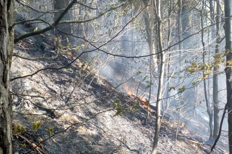 Incendiu de vegetație la Cluj, în apropierea unor case! Flăcările au cuprins un hectar de pădure FOTO