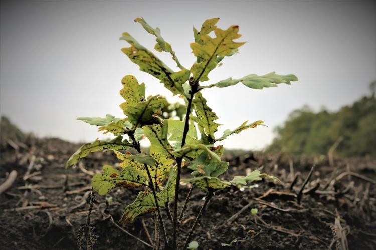 Romsilva a plantat peste 27 milioane de puieți forestieri în campania de împăduriri de primăvară