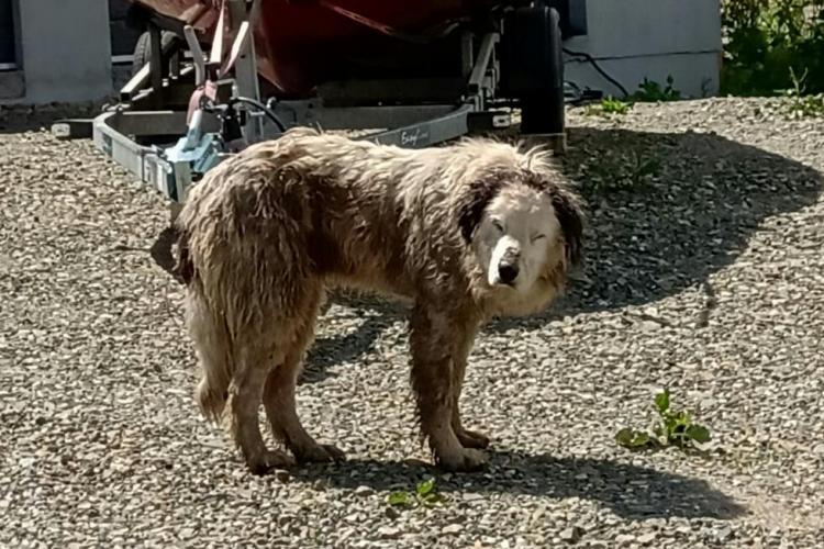 Câine căzut într-un șanț de 2 metri adâncime, salvat de pompierii clujeni FOTO