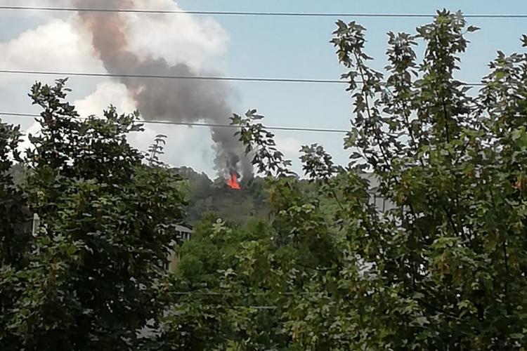Arde pădurea Hoia! Trei echipaje de pompieri intervin VIDEO