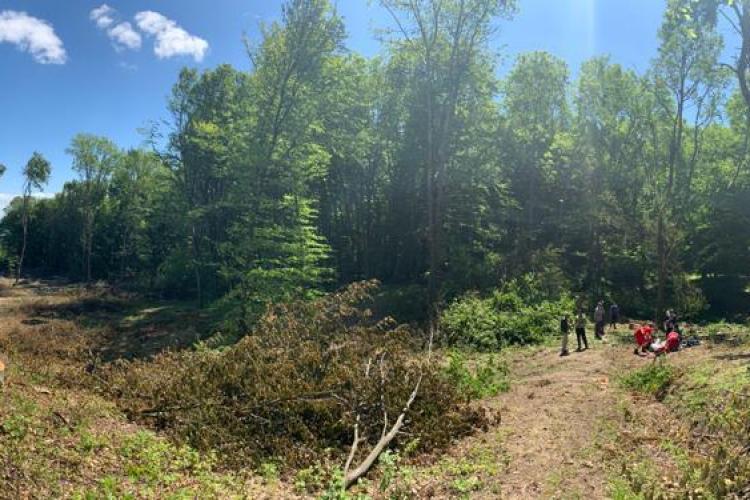Accident de muncă grav, într-o pădure din Cluj! Un tânăr aflat în comă a fost dus cu elicopterul la spital FOTO