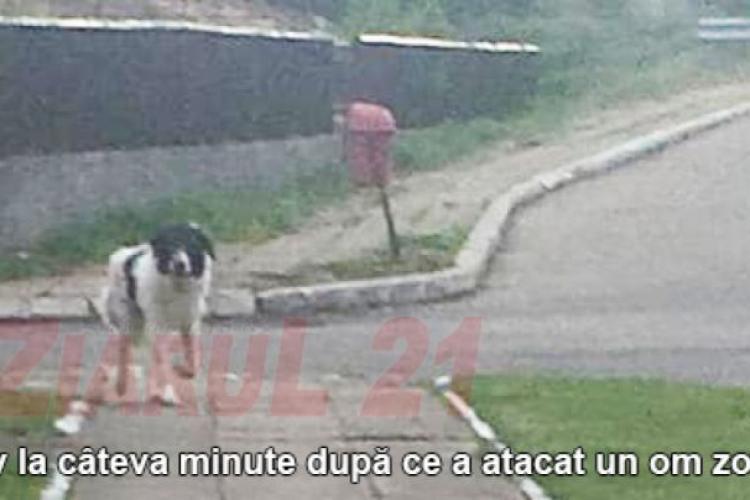 """Clujean sfâșiat de câini: """"O să fiu operat pentru tendonul smuls"""""""
