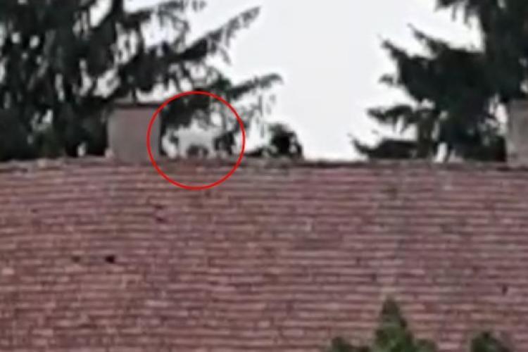 Un ied urcat pe un acoperiș a fost salvat de pompierii din județul Cluj - VIDEO