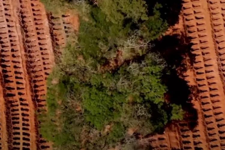 Mii de morminte săpate în Brazilia, unde coronavirusul face ravagii - VIDEO